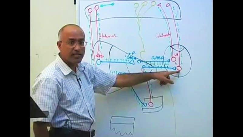 Basal Ganglia Neuroanatomy Dr Najeeb Lectures