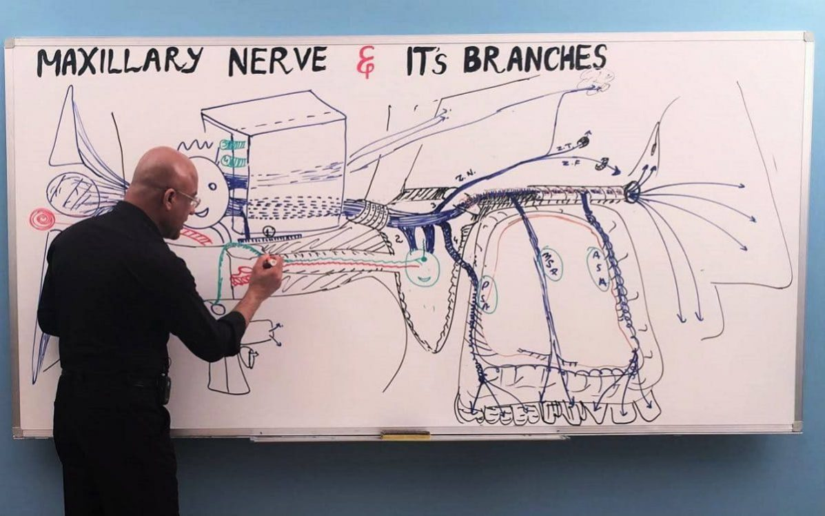 Maxillary Nerve - Dr. Najeeb Lectures