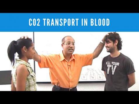 Carbon Dioxide Transport in Blood – Gas Exchange
