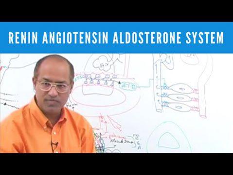 renin angiotensin aldosteron system